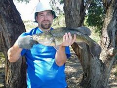 PB Safwaa Murray Cod