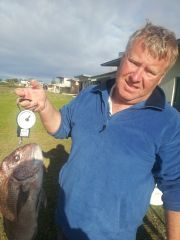 Arno Bay snapper