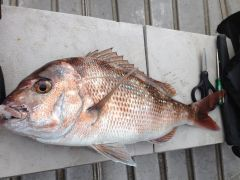 Port River Snapper