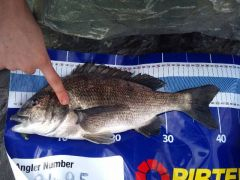 PB SP Bream