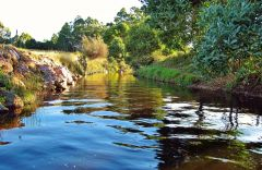 Calm water, Dasher River 4:45pm.