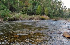 Fast water, Mersey River at Weegena.