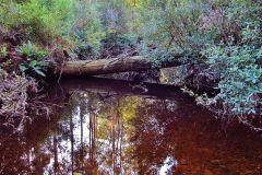 Old fallen log, Minnow River.