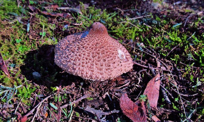 Fungi At Loongana.