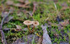 Small pair of fungi