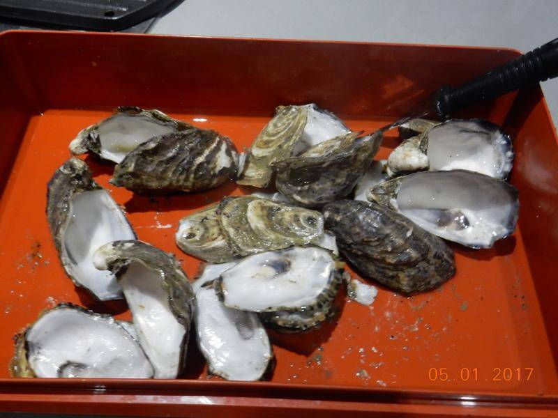 OYSTER KILLPATRICK WITH ATTITUDE 004.JPG