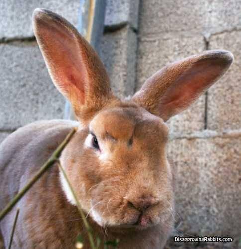 RabbitUnahppy.jpg