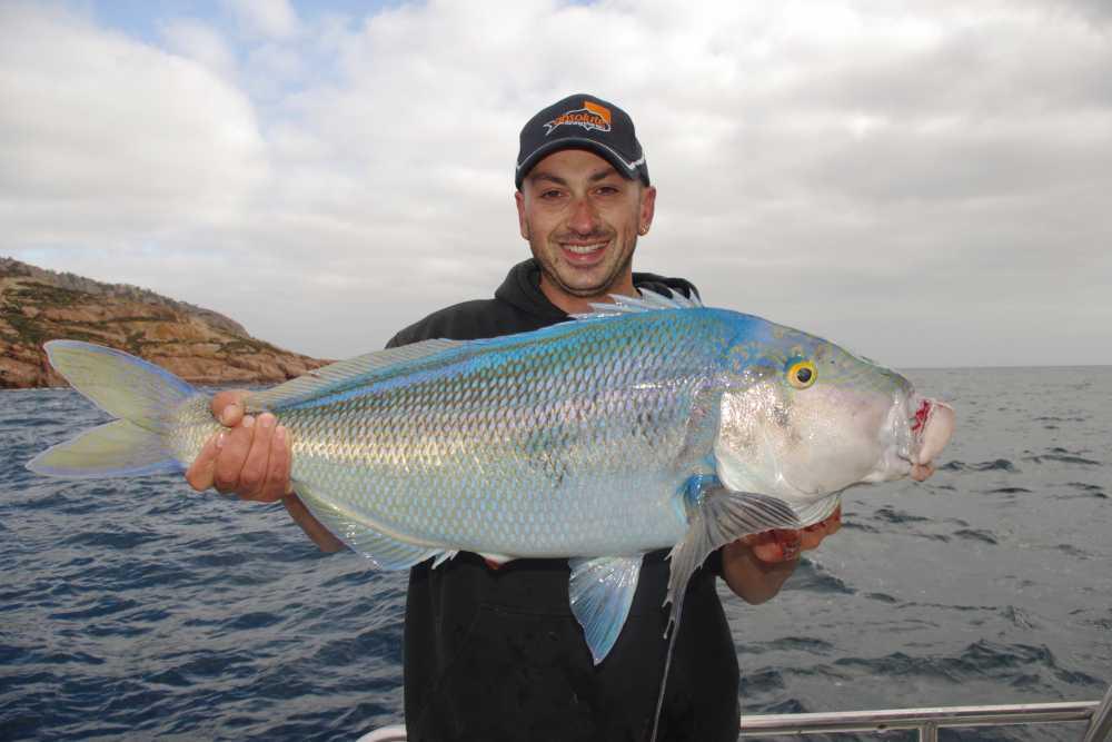 biggest blue morwong - Brag Board & Largest Species - Strike