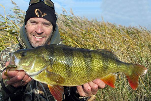 48 cm Mads Grosell PERCH EUROPEAN (Perca fluviatilis biggest fish in the world ever caught record big huge fishes records largest IGFA monster fishing ocean sea giant images lb pound pictures .JPG