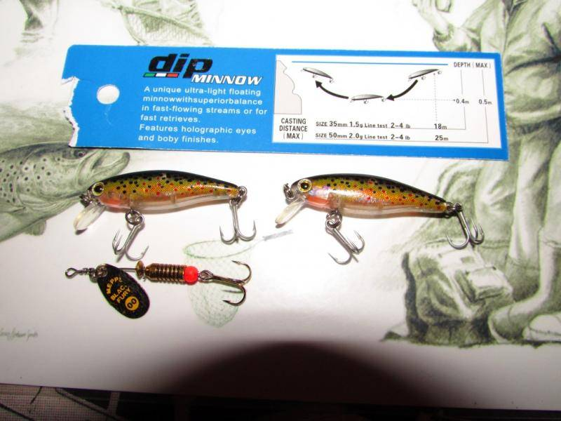 Dip minnows (Medium).JPG
