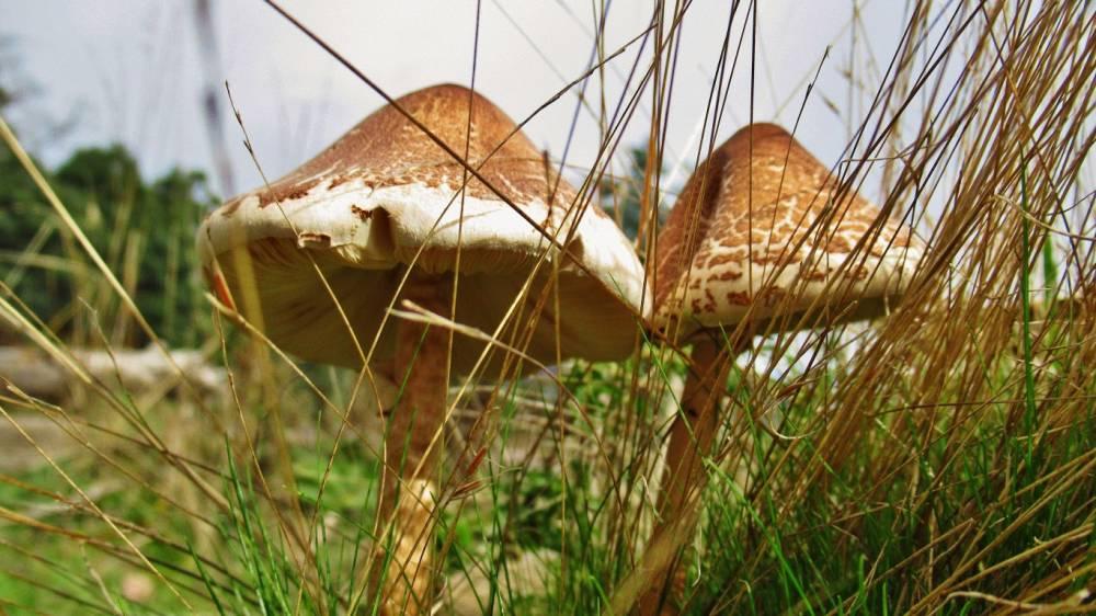 Fungi 5997 (Medium).JPG