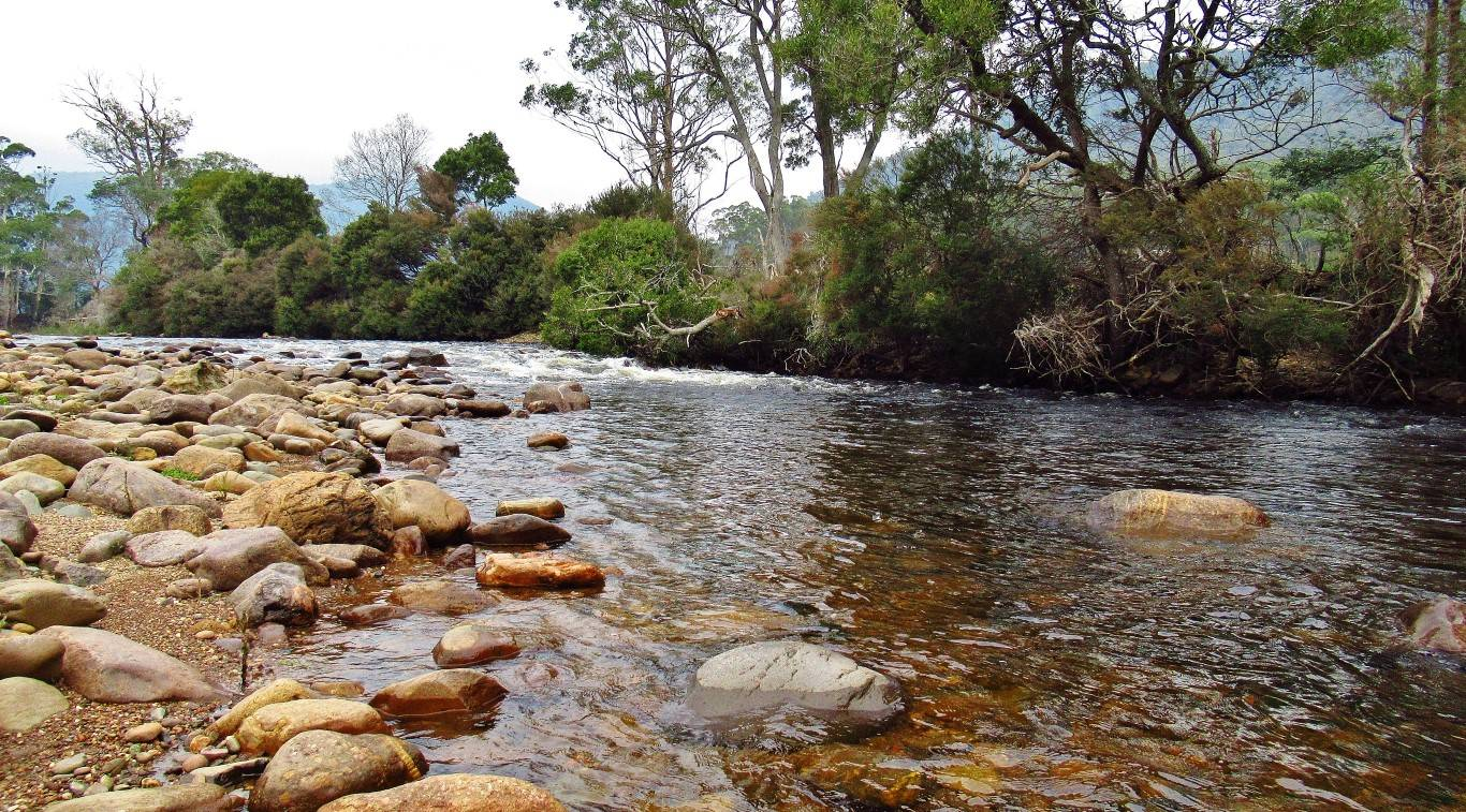 A couple of brown trout caught here, Leven River..
