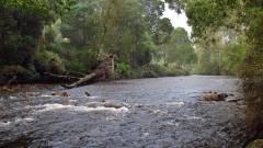 Heavy rain, Leven River..