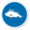 fishing-icon-06.png