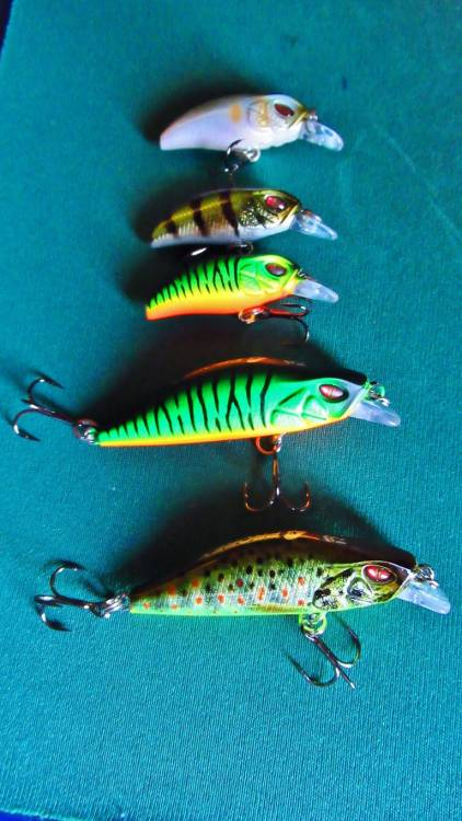 Daiwa Prorex lures 3 cm & 5 cm (Medium).JPG