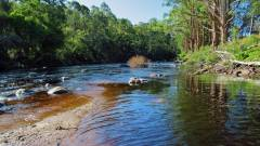 Where a back water flows into the Leven River..JPG