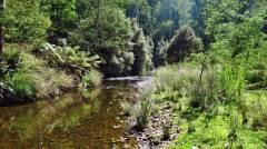 Low water & full sun, makes for tough fishing..JPG