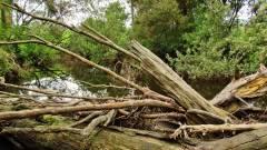 Log jams are common on these little streams. (Medium).JPG