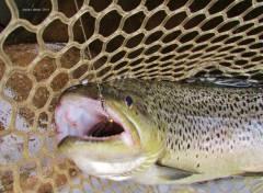 PB 2.9kg brown, Meander River.-1 (Medium).jpg