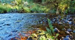Good flat water further upstream.(Medium).JPG