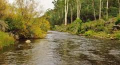 Mersey River side water. (Medium).JPG