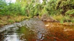 Light tannin fast water, Dasher River.(Medium).JPG
