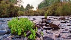 Meander River. 8978 (Custom).JPG
