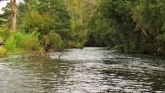 Meander River. 4166 (Large).JPG
