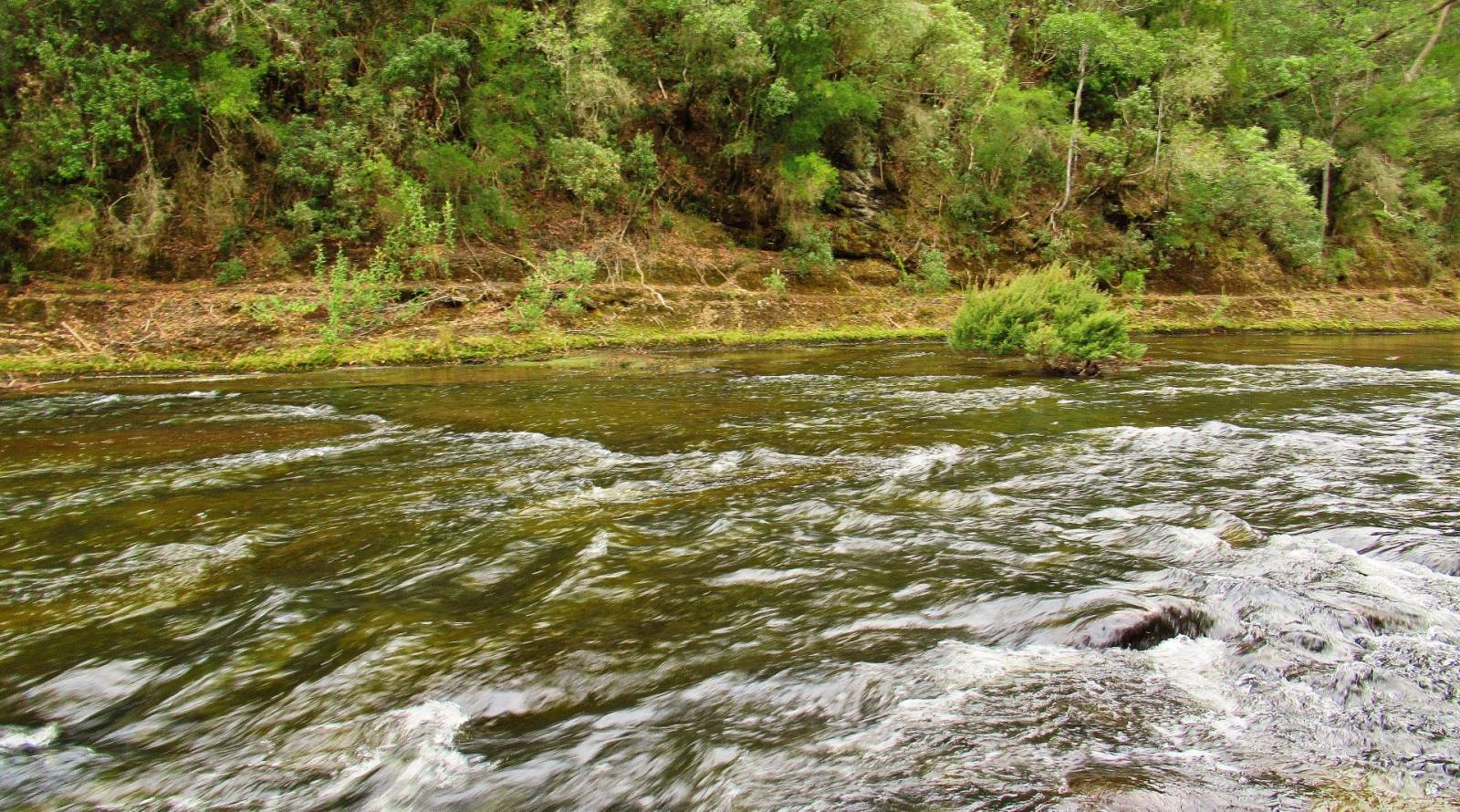 The first trout was taken of the flat water behing the bush..JPG
