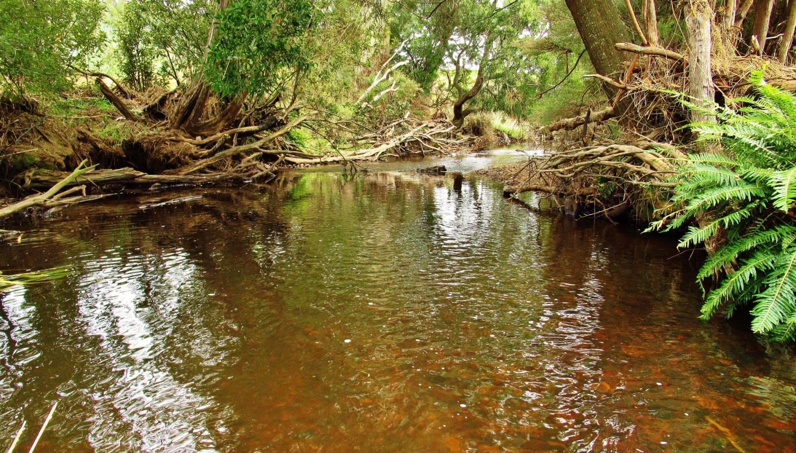 Peace & tranquility in a tannin stream..JPG