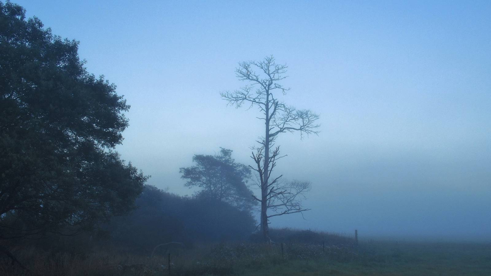 Foggy start to the day..JPG