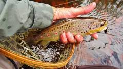 This trout will soon be on it's way..JPG