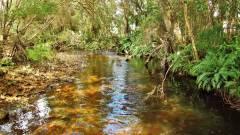 The beauty of a small tannin stream..JPG
