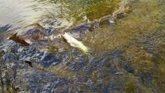 The forth trout of the day..JPG