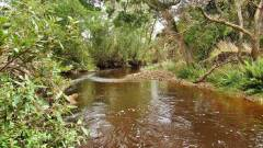 Just love fishing these small streams..JPG