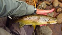 This big brown is ready for release.(Medium).JPG