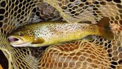 Day 1, First of two trout caught & released..JPG